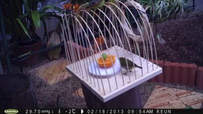 小鳥 007.jpg